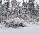 Подмосковье, Страна белоснежных троп – однодневный лыжный