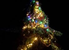 Подмосковье, Новый год на острове наслаждений