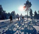 Подмосковье, Лыжный поход - Лесная зимняя сказка - Подмосковье