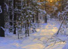 Кольский, Большое Северное автопутешествие. Новогодний Териберка-тур: на край Земли в погоне за северным сиянием