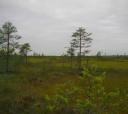 Сев-Запад, По болотам и лесам на юге Ленобласти