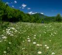 Кавказ, Южное цветочное путешествие: медовое цветение Азалии