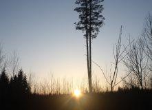 Подмосковье, Пеший однодневный поход - тайны урочища Тёплое