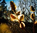 Подмосковье, Сплав по реке Поля – сквозь лес на байдарках