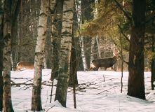 Подмосковье, Лыжная экспедиция в поисках варенья - Ярославская область