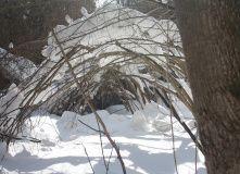 Подмосковье, Комфорт-тур на лыжах Изумруд Бухары (Владимирская область)