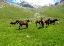 Восхождение на Эльбрус, Твоя Вершина: Восхождение с юга (западная вершина 5642 м)