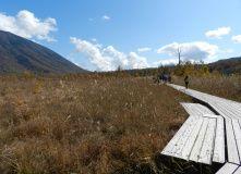 Япония, Осень у подножия Фудзиямы