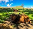 Шотландия, Храбрая Шотландия (разведка)