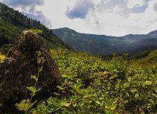 Абхазия, Детская Абхазия