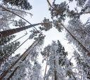Подмосковье, Пеший или Лыжный поход - «Тру хардкор»