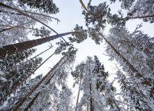 Подмосковье, Лыжный поход - «Тру хардкор»
