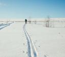 Подмосковье, Лыжный поход под Владимир в урочище Веретьево