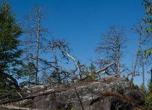 Карелия, На байдарках: Кереть и Белое море