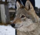 Подмосковье, Конный эко-тур - Танцы с волками - Тверская область