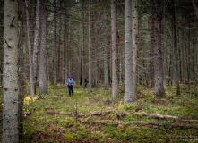 Подмосковье, Пеший поход - Сквозь лесные дебри к острову наслаждений