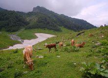 Абхазия, Горный лагерь в Абхазии (с проживанием в домиках)