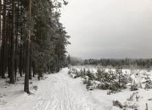 Сев-Запад, Лыжный поход для начинающих (С-Пб)