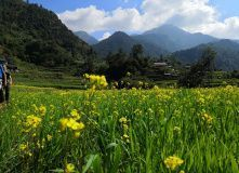 Непал, Мульти-тур по Непалу. Трекинг к Анапурне, парк Читван и древние города
