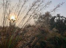 утро на плато Хортон