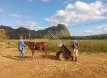 Центральная и Южная Америка, Куба: Незабываемое Путешествие