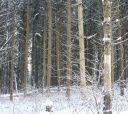 Подмосковье, Лыжный поход - Вокруг Торбеева озера за один день