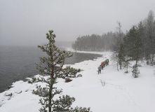 Сев-Запад, Пеший поход на снегоступах по берегу Ладоги (с ночевкой в теплом шатре)