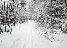 Подмосковье, Лыжный поход- Учебно-Тренировочные Сборы-Подмосковье