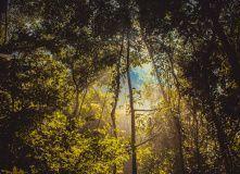 Джунгли острова Кат Ба