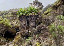 Килиманджаро (Танзания), Восхождение на Килиманджаро. Маршрут Мачаме
