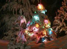 Подмосковье, Новый год в лесу
