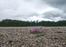 Камчатка, Вулканы и горячие источники: природный парк Налычево [Камчатка]