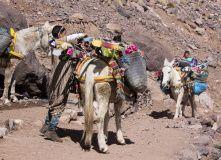 Марокко, Трекинг по Высокому Атласу (с восхождением на Тубкаль)
