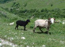 Кавказ, Скалистый Хребет: из Балкарии в Северную Осетию