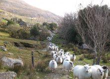 Ирландия, Суровая и прекрасная Ирландия. Пеший маршрут с ночёвками в уютных гостевых домах