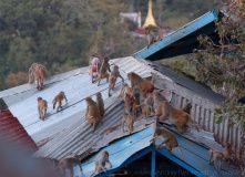 Мьянма (Бирма), Страна золотых пагод