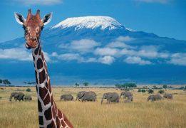 Сафари в Танзании. В гости к «Королю льву»