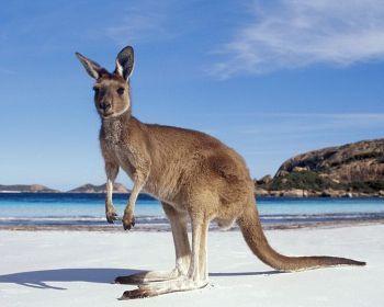Увлекательное путешествие по Австралии с юга на север
