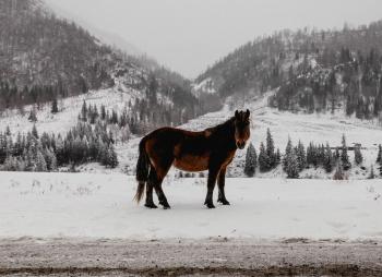 Зимний Горный Алтай: большой фототур (разведка)