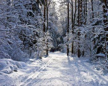Лыжный поход - Лесная зимняя сказка - Подмосковье