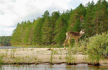Финляндия на байдарках: природный заповедник Лентуа