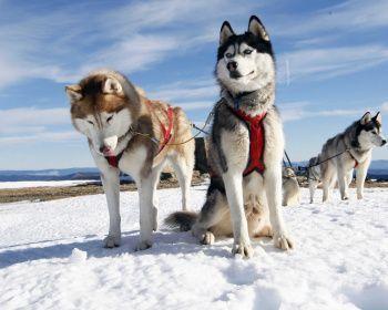 Лыжный поход - Монастырь и Хаски