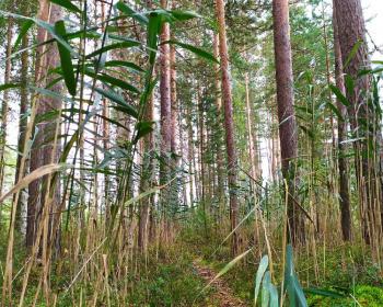 Пеший поход - Сквозь лесные дебри к острову наслаждений