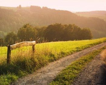 Хёрвайн – следуя руническим камням. Паломнический путь по Дании
