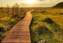Экотропа Сестрорецкое болото и прогулка по берегу Финского залива
