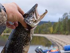 Сплав и рыбалка на реках Индель, Пана и Варзуга (рыболовный маршрут)