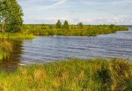 Сестрорецкий разлив и парк Дубки (с посещением шалаша Ленина и прогулкой на пароме)