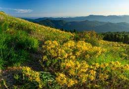 Южное цветочное путешествие: медовое цветение Азалии