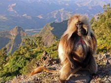 Трекинг по Эфиопии с восхождением на Рас-Дашен 4550 м