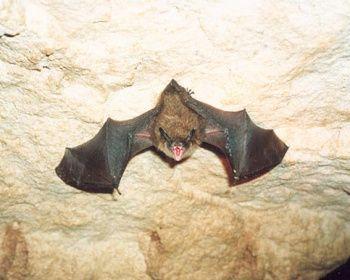 Спелеопоход в Саблинские пещеры
